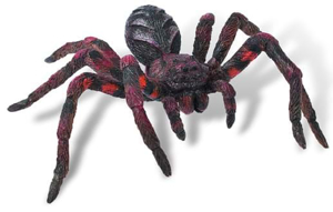 Picture of Wolf Spider