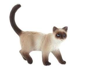 Picture of Pisica siameza Kimmy